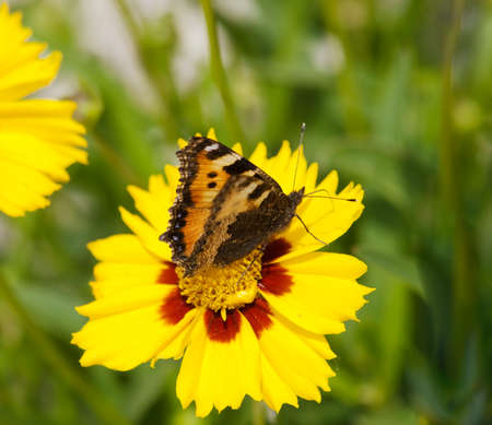 Butterfly sitting on yellow flower