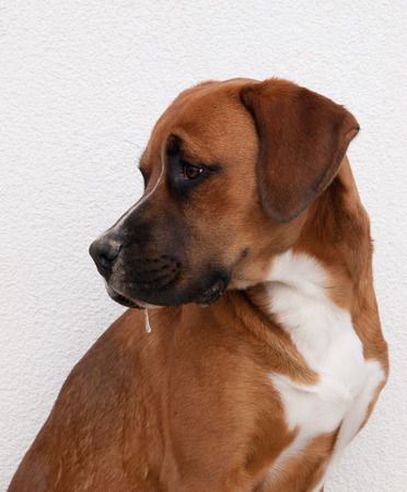 gregarious: Portrait of young crossbreed dog