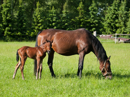 Mare with newborn foal on pasture