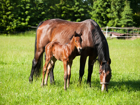 Mare and newborn baby on pasture Stock Photo