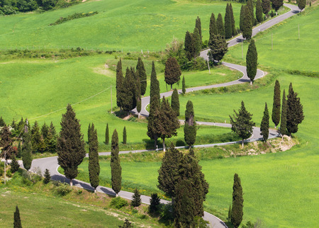 Tuscany, Italy - typical road with cypress
