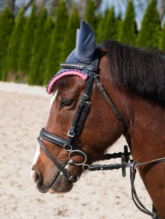 bridle: Portrait of sport pony with bridle Stock Photo