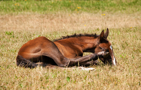 One day odl lying on meadow stratching on head Stock Photo