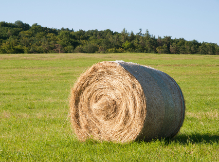 hayroll: Harvesting of hay - hay bale on the summer meadow Stock Photo
