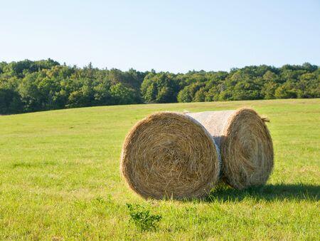 hayroll: Harvesting of hay - hay bales on the summer meadow Stock Photo