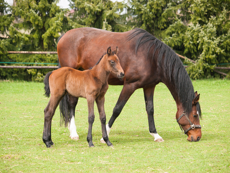 Potrait of one day old foal and mare on the pasture Imagens