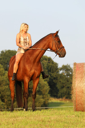 Dame reitet am Sommertag auf der Wiese Standard-Bild