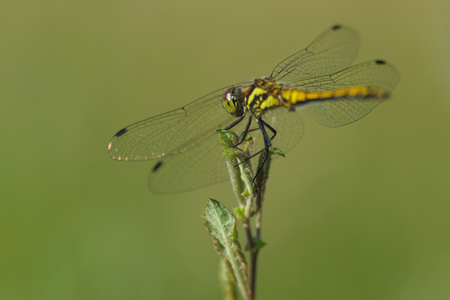 dragonfly relaxing in summer gras Stock Photo