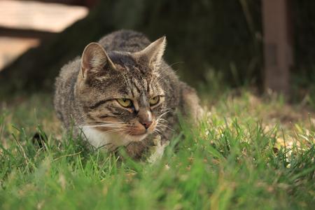 Animal Hunter as a little cat