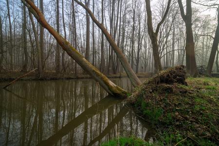 Robecsky potok river in Peklo valley in czech turist region Machuv kraj