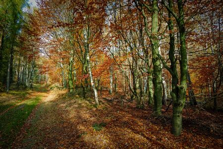 Empty road in colorful autumn forest
