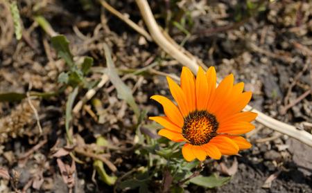 unfold: Orange flower on a slightly blurred background