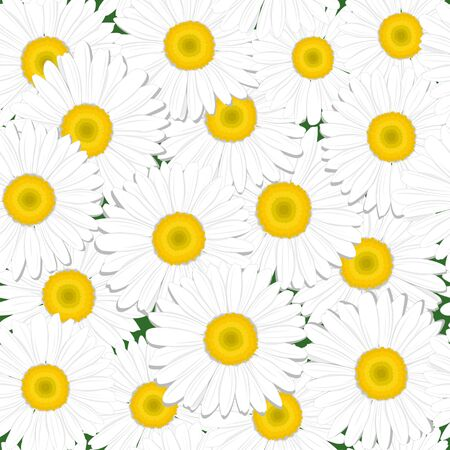inflorescence: Seamless texture in a field of daisies