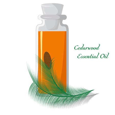redolence: Bottle with cedar oil on a background of branches with a lump Illustration