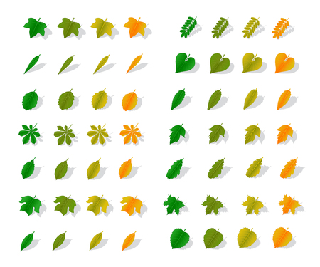 viburnum: A set of leaves of various trees from green to orange with shadow