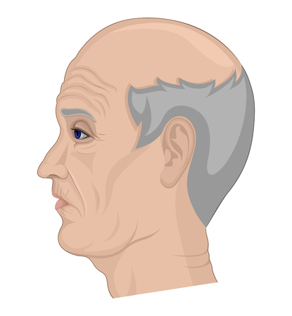 Illustration of an elderly man with gray hair and a bald head pictured on the side