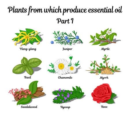 Planten waaruit etherische oliën illustratie produceren