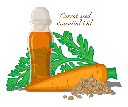Bottle with essential oil Carrot seeds with leaves, roots and seeds on background