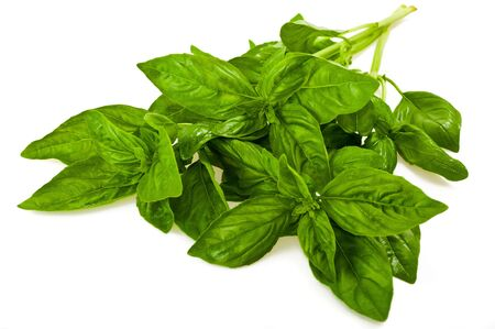 bunch: bunch of basil isolated on white Stock Photo