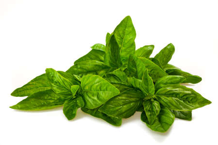 bunch of basil isolated on white Banque d'images