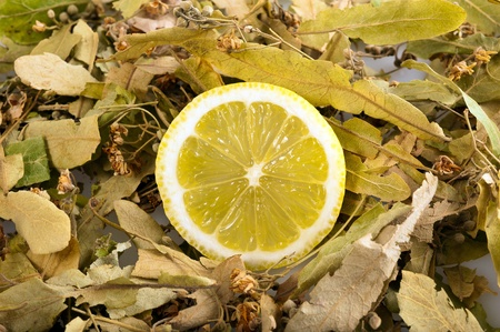 Lemon sliced and linden dried photo