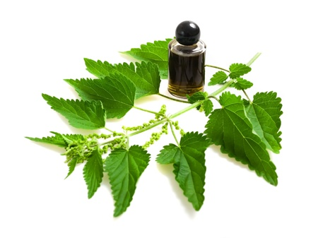 stinging nettle: Nettle extract and wild nettle Stock Photo