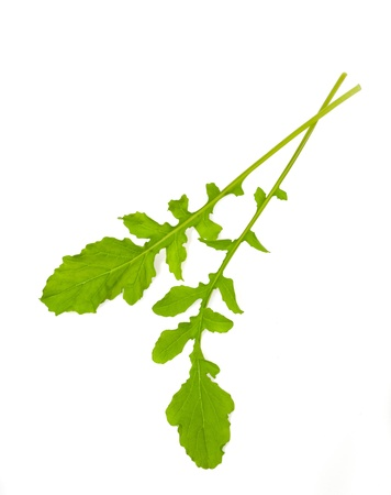 edible leaves: Two rocket leaves isolated on white