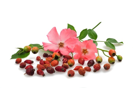 flowers and fruits of wild rose photo
