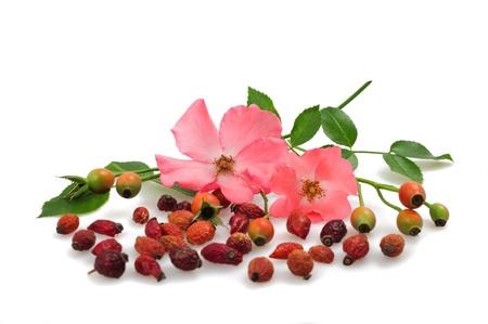 fiori e frutti di rosa selvatica