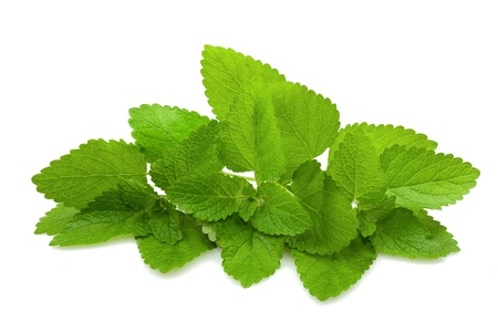 lemon balm: bunch of Melissa isolated on white