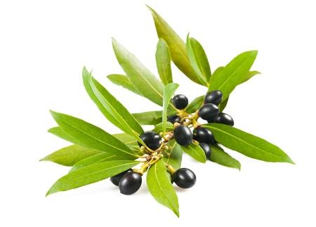 frutas secas: Ramas de laurel aislados en blanco