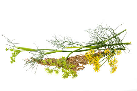 Flowers and seeds of wild fennel isolated on white photo