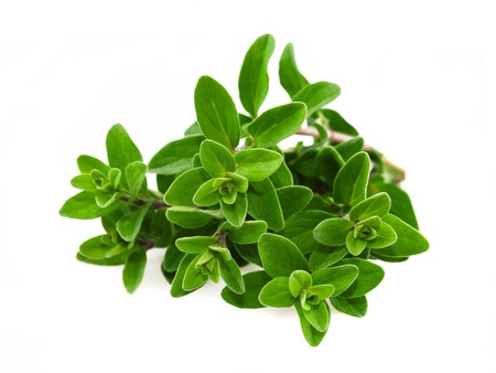 origanum: Bunch of marjoram isolated on white