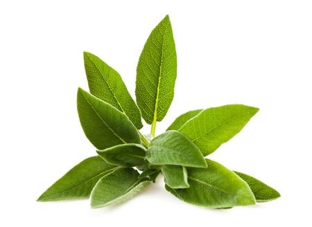 Sage sprig isolated on white photo