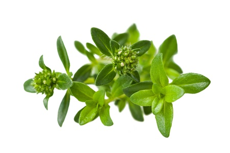 herbs de provence:  Summer savory sprig isolated on white