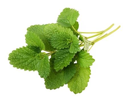 melissa: Lemon balm sprig isolated on white