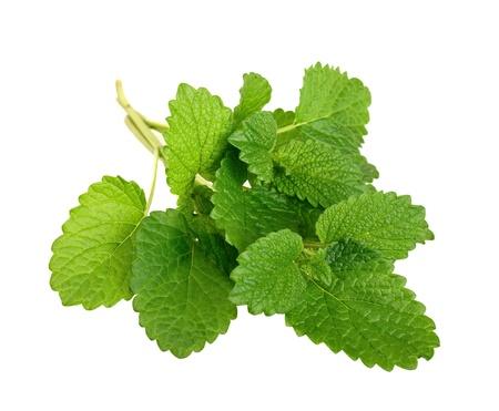officinal: Lemon balm sprig isolated on white