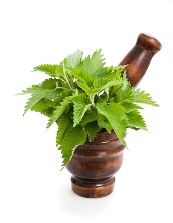 Wild nettle,mortar and pestle isolated on white photo