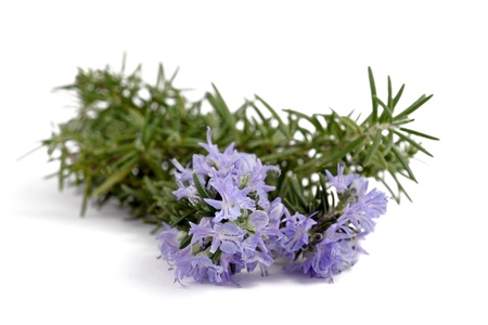 Rosemary with flowers isolated on white photo