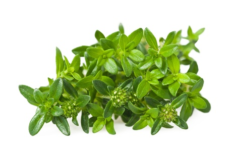 Summer savory sprig isolated on white background photo