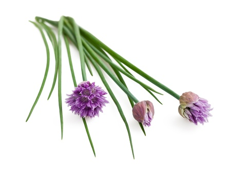 Chives flowers isolated on white photo