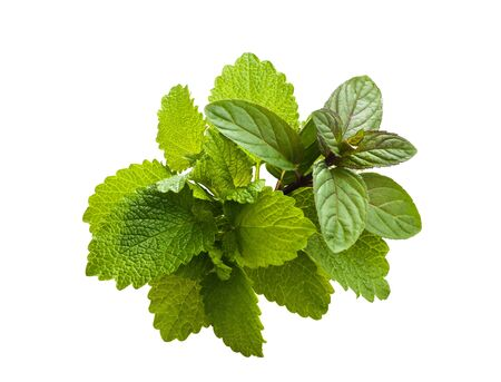 Peppermint and lemon balm   isolated on white background Stock Photo - 13369543