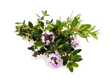 tomillo: Savory flores aisladas en blanco Foto de archivo