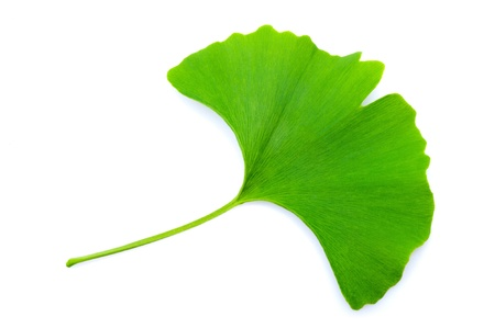 Ginkgo biloba leaf isolated on white Stock Photo
