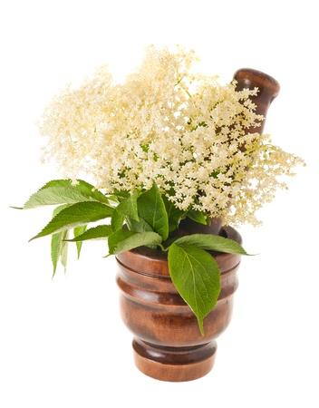 morter: Fiori di sambuco in un mortaio isolato su bianco