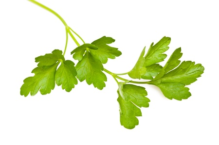 Bunch of parsley isolated on white Stock Photo - 13997268