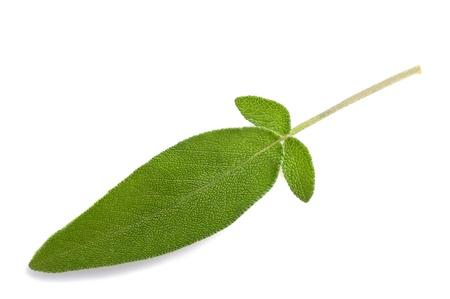 salvia: sage leaves isolated on white