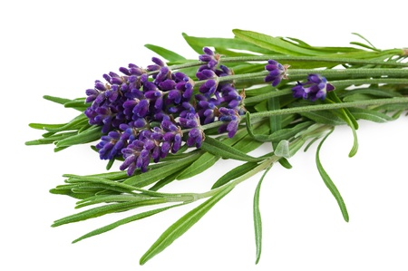 lavender flower and leaves isolated on white Stock Photo - 14206212