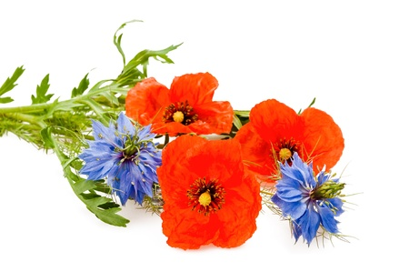 nigella and poppy flowers isolated on white photo