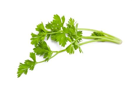 antirheumatic: celery sprig isolated on white Stock Photo